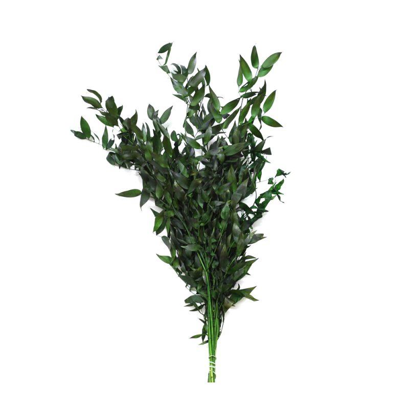 ruscus green
