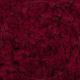 Lichen - Carmin Red 72