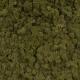 Lichen - Olive 82