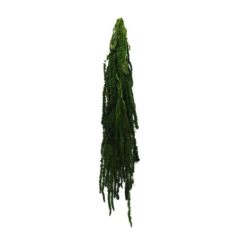 amaranthus green