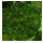Provence Moss