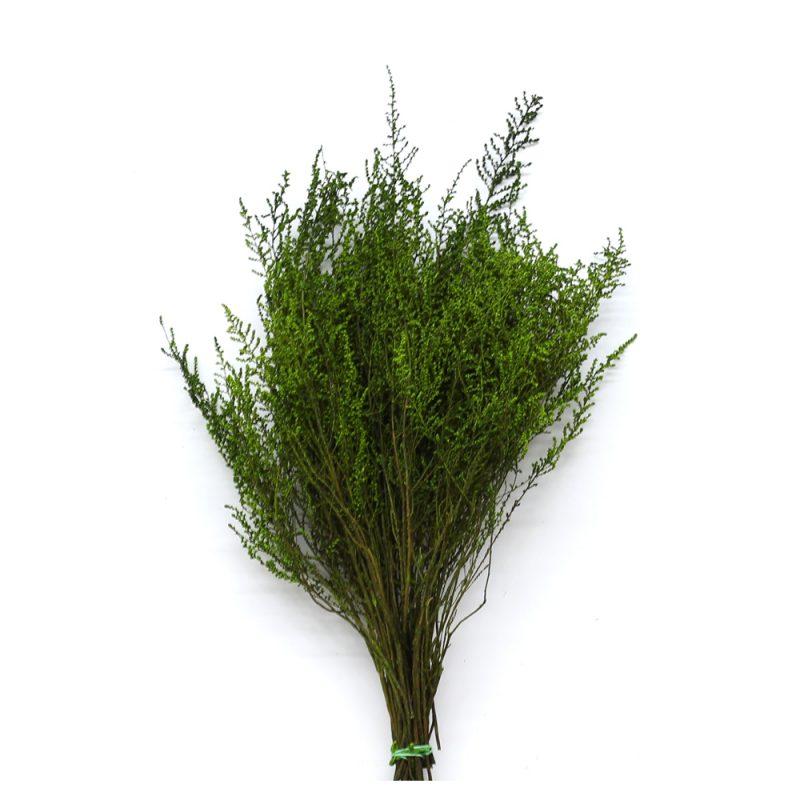 stoebe green