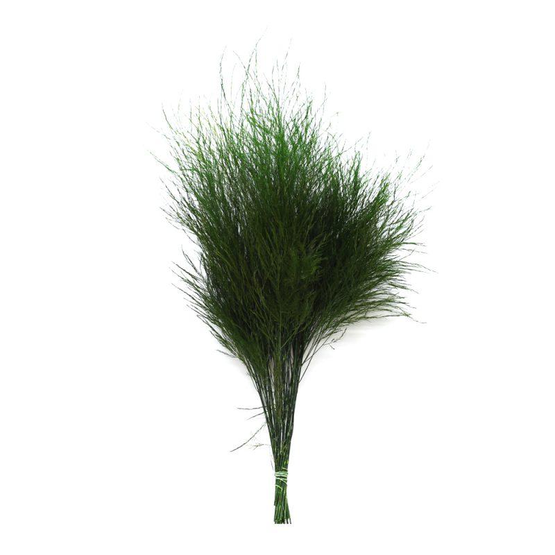tiki – tree fern