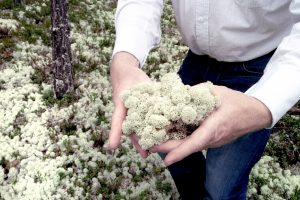 lichen2-greenmood