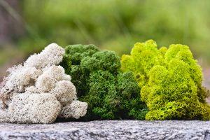 lichen5-greenmood