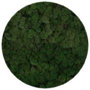 54 Moss Green