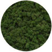 80 Medium Green